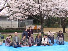 花見(桜見物)
