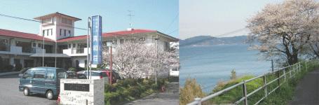 sinwa-sakura_02